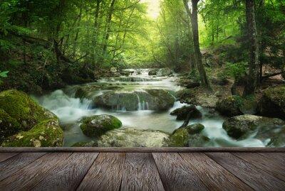 Obraz forest waterfall