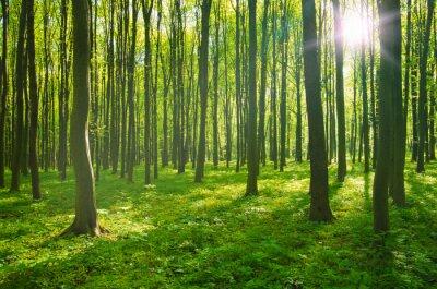 Obraz Forest wiosną