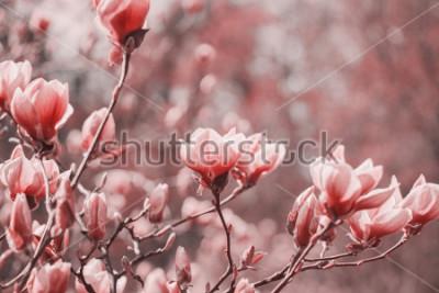 Obraz Fotografia trendów na temat nowego koloru roku 2019 - Living Coral. Wiosny magnolia dostępne na stos tle.