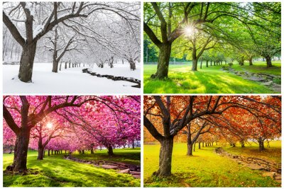Obraz Four seasons with japanese cherry trees in Hurd Park, Dover, New Jersey