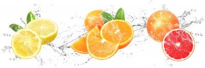 Obraz Fresh Fruits with water splash on isolated white background   Lemon, Orange and Grapefruit