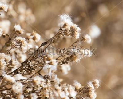 Obraz fuzz na roślinyinie na zewnątrz jesieni