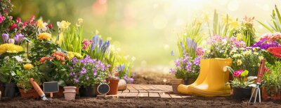 Obraz Gardening Concept. Garden Flowers and Plants on a Sunny Background