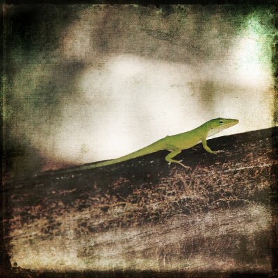 Obraz Gecko Zielony Cameleon Lizard na Brown Wood Branch