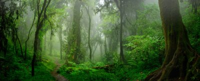 Obraz Głębokie tropikalne dżungle Azji Południowo-Wschodniej w sierpniu