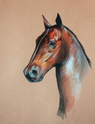 Obraz głowa konia zatoki