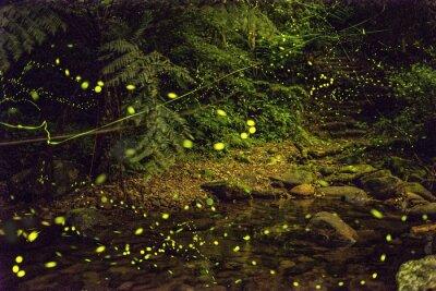 Obraz glowworm in mountain