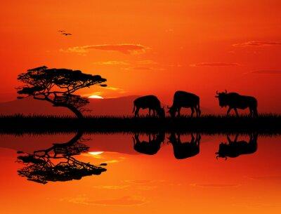 Obraz gnu sylwetka o zachodzie słońca