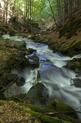 Górski potok w lesie