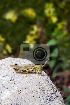 Grasshopper na granit