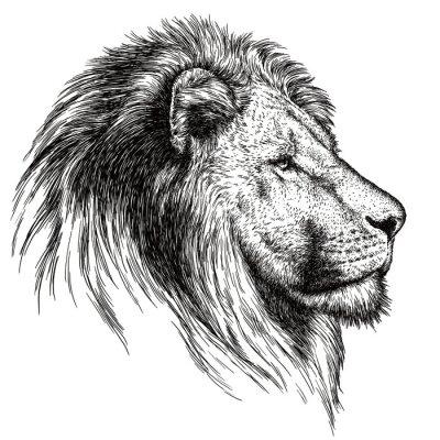 Obraz grawerować ilustracja lwa