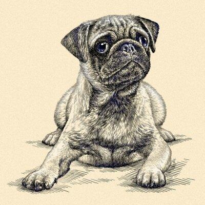 Obraz grawerować ilustracja psa