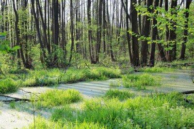 green bog in wild forest