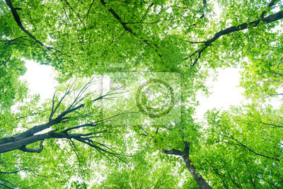 Green forest landscape with trees and sun light going through leaves, view to the top of trees