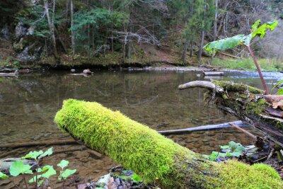 green moss on woods near river