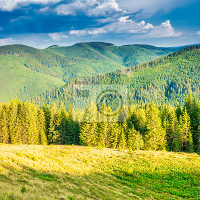 Green mountains with pine forest at sunset sun light