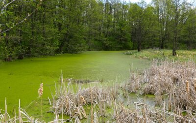 green swamp in forest