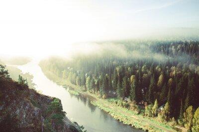 Obraz grube poranna mgła w lesie iglastym. drzewa iglaste, zarośla zielonym lesie.