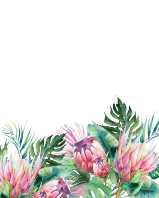 Obraz Hand drawn greeting card design with exotic leaves and protea flowers isolated on white background. Palm tree, banana leaves, mostera plants