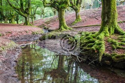 Hayedo de Otzarreta, Parque Natural del Gorbea, Bizkaia (Hiszpania)
