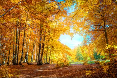 Obraz Heart of Autumn - yellow orange trees in forest with heart shape