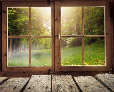 Obraz Holzhütte mit Ausblick auf eine Waldlichtung im Frühling / Frühsommer bei Sonnenschein