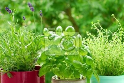 Obraz home herb `s garden