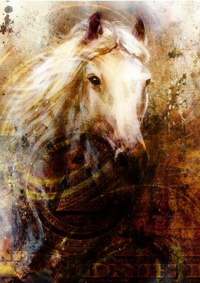 Obraz Horse heads, abstract ocre background, with one dollar collage.