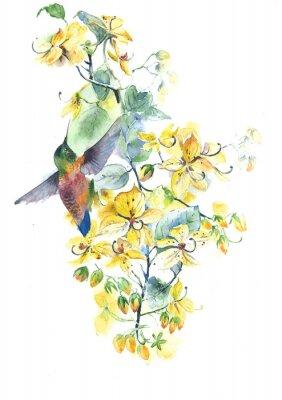 Obraz Hummingbird i kwiaty akwarela ilustracji samodzielnie na białym tle
