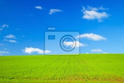 Idealne Pole zielone i niebieskie niebo