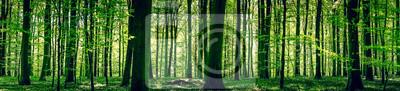 Obraz Idylliczne lasu na wiosnę