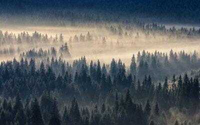 Obraz iglastego lasu w mglisty górach