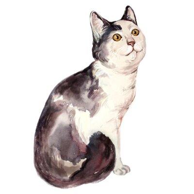 Obraz Ilustracja akwarela brzydkiego kota patrząc zdezorientowany