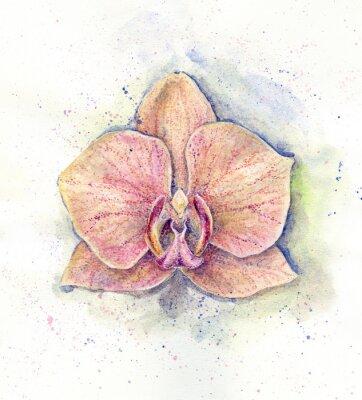 Obraz Ilustracja akwarela różowej orchidei. Tropikalny kwiat