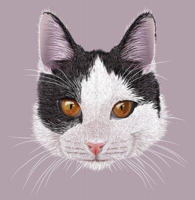 Obraz Ilustracja Portret kota domowego. Cute młodych kotów dwukolorowa z pomarańczowymi oczami.