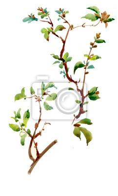 Ilustracja wiosna gałązka