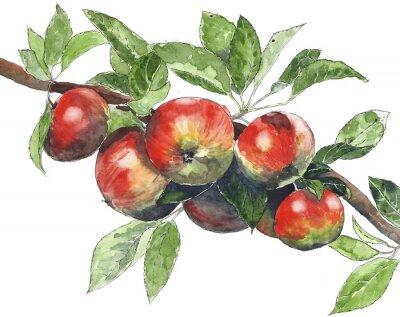 Jabłka na drzewie Ilustracja akwarela na białym tle