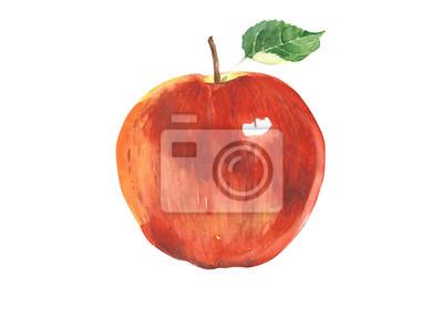 Jabłko czerwone Akwarele ilustracji na białym tle