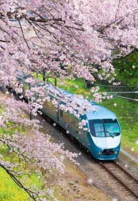 Obraz Japonia pociąg w Sakura wiśniowy kwiat w Yamakita Town, prefektura Kanagawa
