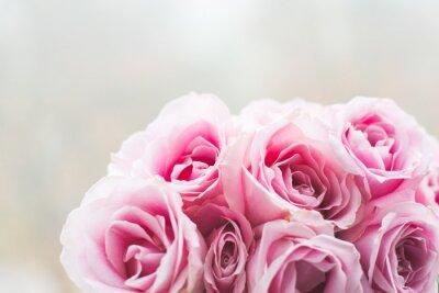 Obraz Jasne różowe róże tle