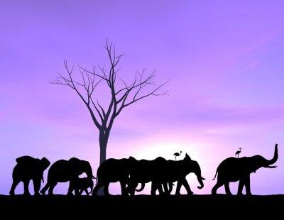 Obraz Jeden słoń jest liderem jak inni się z purpurowym zachodzie lub wschodzie słońca.
