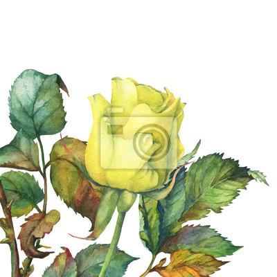 Jeden z pięknym złotym żółta róża z zielonymi liśćmi. Ręcznie rysowane akwarela na białym tle.