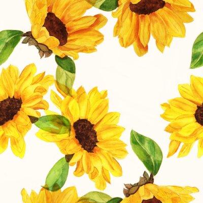 Obraz Jednolite wzór akwarela słoneczniki na białym tle