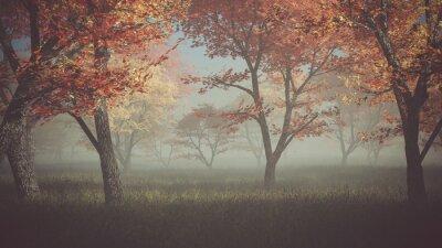 Obraz Jesień las we mgle.