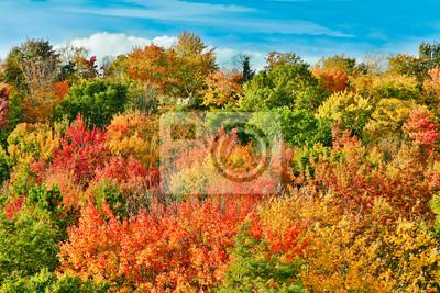 Jesień na rzece Cut