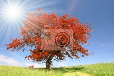 Jesienią krajobrazu w park narodowy Sumava - Czechy