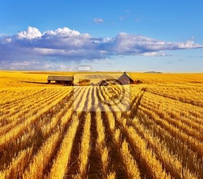 Jesienią południe na pola Montana