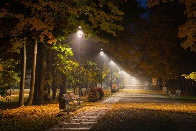 Obraz Jesienna aleja w parku w nocy w Konstancinie Jeziornej, Mazowieckie, Polska