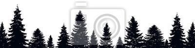 Obraz Jodła drzewa