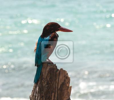 Kingfisher na patyku